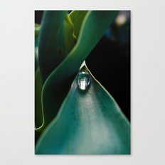 A drop caught Canvas Print