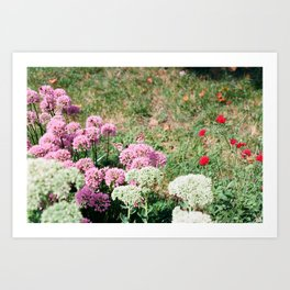 Butterfiles // Met Cloisters Art Print