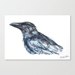Crow with Blue Canvas Print