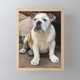 British bulldog puppy Framed Mini Art Print