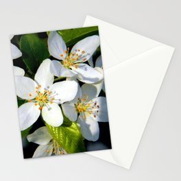 Floral Beauty #9 Stationery Cards