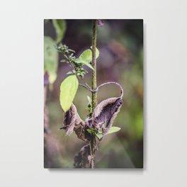 Nature: Old Love Metal Print