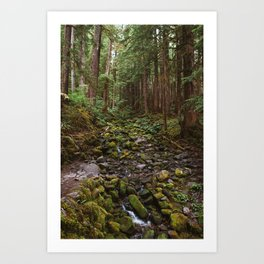 Mossy Creek through the Woods Art Print