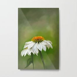 Little White Cone Flower Metal Print
