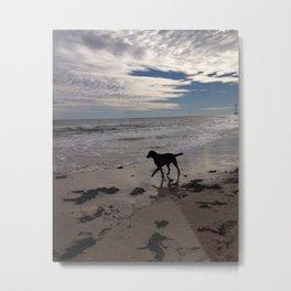 Dog at the Beach Metal Print
