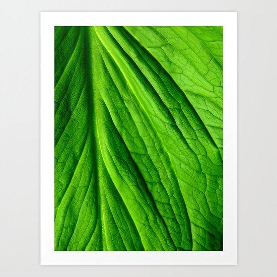 Leaf #7 Art Print