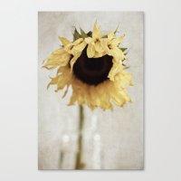 sunflower Canvas Prints featuring sunflower by Bonnie Jakobsen-Martin