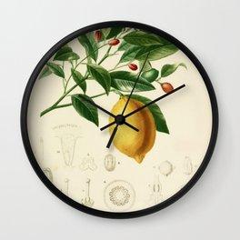 Vintage Lemon Tree Illustration Wall Clock