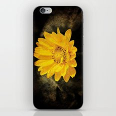 Beautiful Sunflower with Dark Brown Background iPhone & iPod Skin