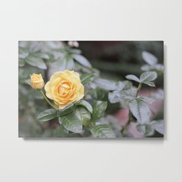 untitled flower #6 Metal Print