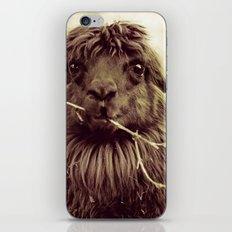 Hello Llama iPhone & iPod Skin