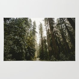 Redwood Forest Adventure III - Nature Photography Rug