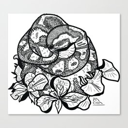 Python and iris flowers Canvas Print