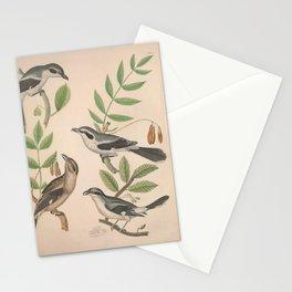 Greater Northern Shrike American Gray Shrike Great American Shrike Loggerhead Shrike9 Stationery Cards