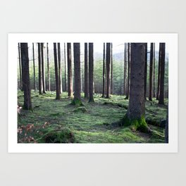 Between the trees Art Print