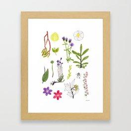 Herbarium #2 Framed Art Print