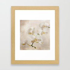 orchid (brown) Framed Art Print