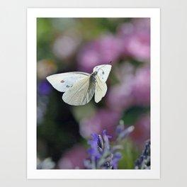 Love Papillons - Butterfly Art Print