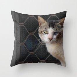 Cat by Dhruv Singh Throw Pillow