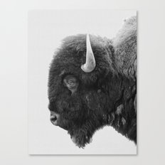 buffalo profile Canvas Print