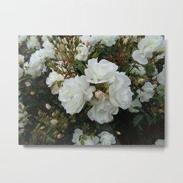 Shield of White Roses Metal Print
