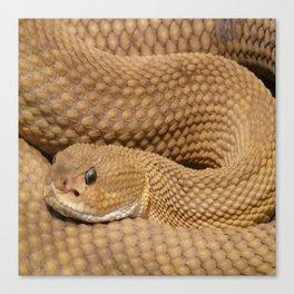 Brown Rattlesnake  Canvas Print