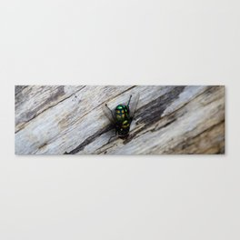 Bush Fly Canvas Print