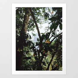 Jungle of Machu Picchu Art Print