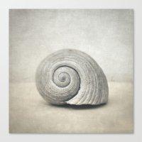 seashell Canvas Prints featuring Seashell by Taylan Soyturk