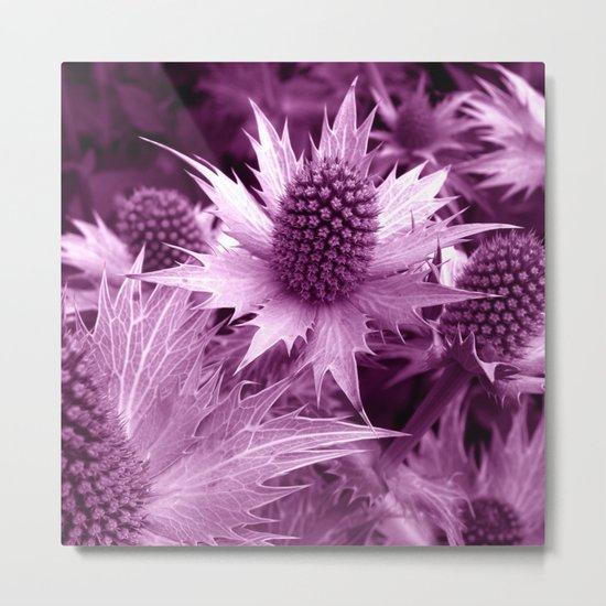 purple thistle VI Metal Print