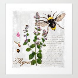 Cottage Style Thyme, Bumble Bee, Hummingbird, Herbal Botanical Illustration Art Print