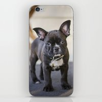 frog iPhone & iPod Skins featuring Frog by Carol Knudsen Photographic Artist