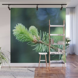 Spruce branch in spring. Wall Mural