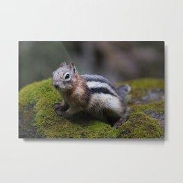 GroundSquirrel Metal Print