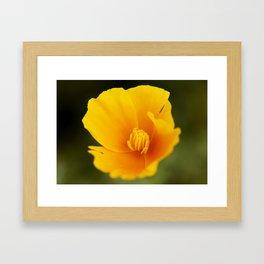 California Poppy Framed Art Print
