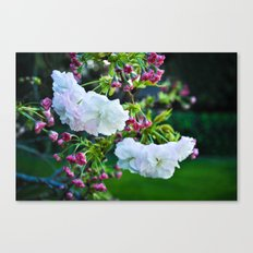 Discovered Canvas Print