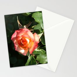 Pink and yellow rose in the sun Stationery Cards
