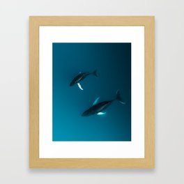 Mother and Child – Humpback Whales in the Ocean – Minimalist Wildlife Photography Framed Art Print