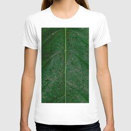 Botanical leaf with rain drops | Tropical travel photography | Nature art print T-shirt