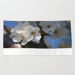 Close Up Of White Cherry Blossom Flowers Beach Towel