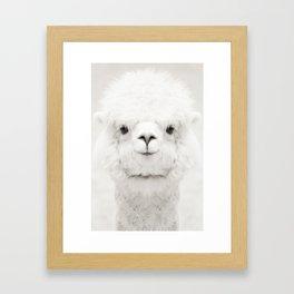 SMILING ALPACA Framed Art Print