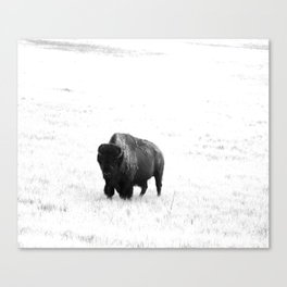 A Bison - Monochrome Canvas Print