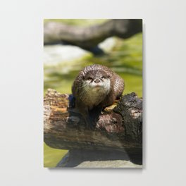 Otter on A Tree Trunk Metal Print