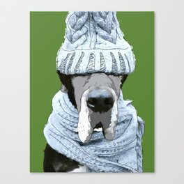 Great Dane ready for winter Canvas Print