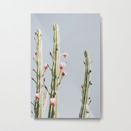 Cereus Cactus Blush Metal Print