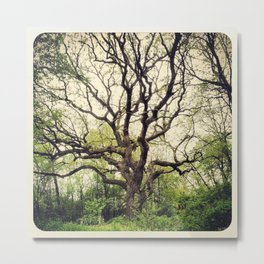 Wise Old Oak Metal Print