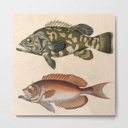 2 Fish Metal Print