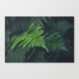 fairy fern Canvas Print