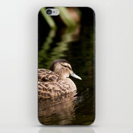 Female Mallard Duck iPhone Skin