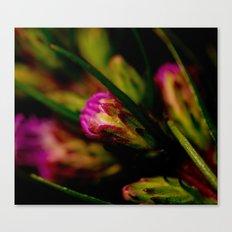 Buds of Purple Canvas Print
